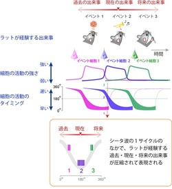 Joint Research of Professor Yoshio Sakurai (Graduate School of Brain Science) and Riken Brain Science Institute Published in Neuron